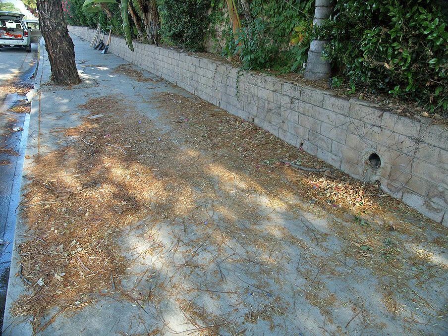 2010.05.19.adopt A Street 05