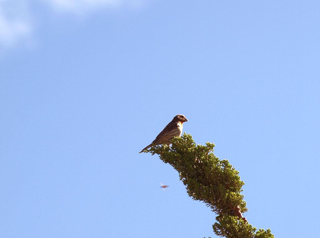 7.31.2010 Birds 04