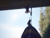 7.31.2010 Hummingbirds 04