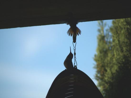 7.31.2010 Hummingbirds 06