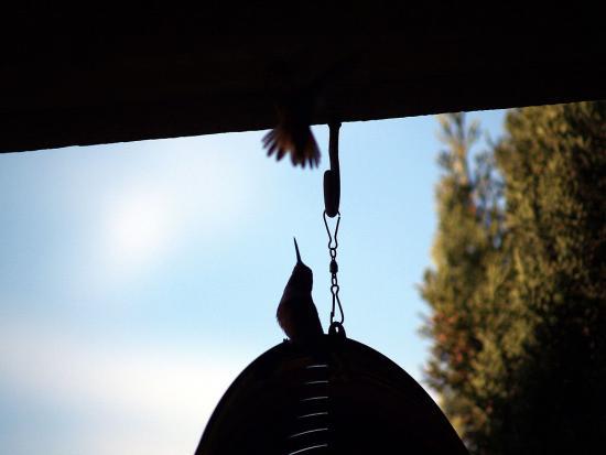 7.31.2010 Hummingbirds 07
