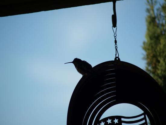 7.31.2010 Hummingbirds 10