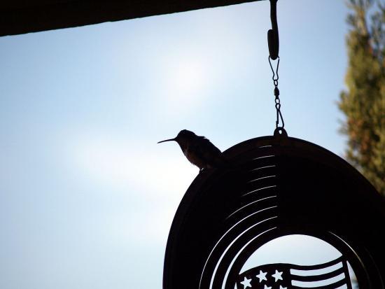 7.31.2010 Hummingbirds 11