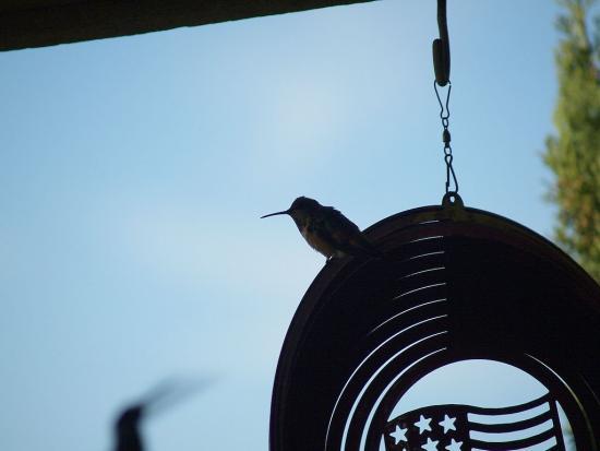 7.31.2010 Hummingbirds 12