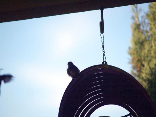 7.31.2010 Hummingbirds 15