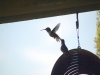 7.31.2010 Hummingbirds 17