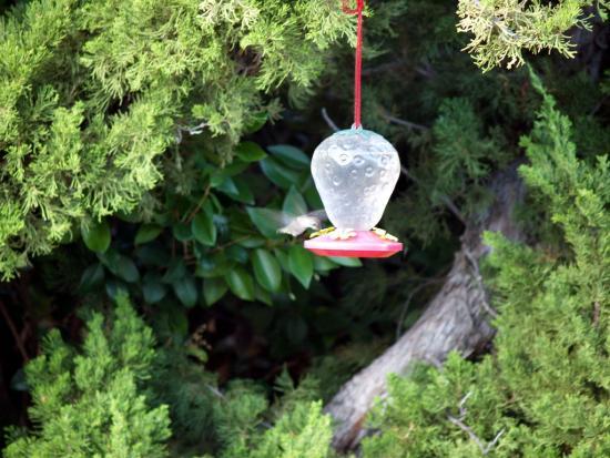 7.31.2010 Hummingbirds 25