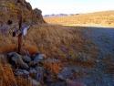 Rosamond Desert 02