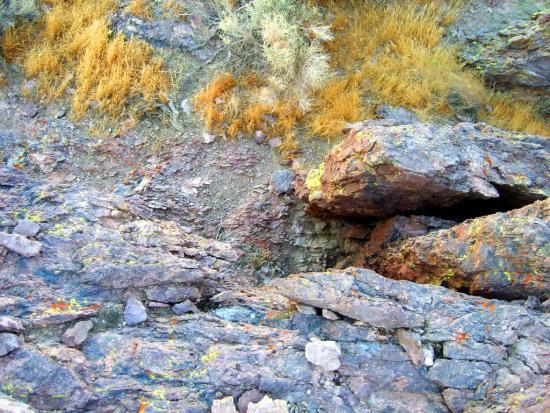 Rosamond Desert 07