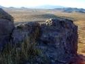 Rosamond Desert 09
