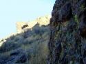 Rosamond Desert 10