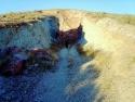 Rosamond Desert 16