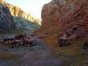 Rosamond Desert 21