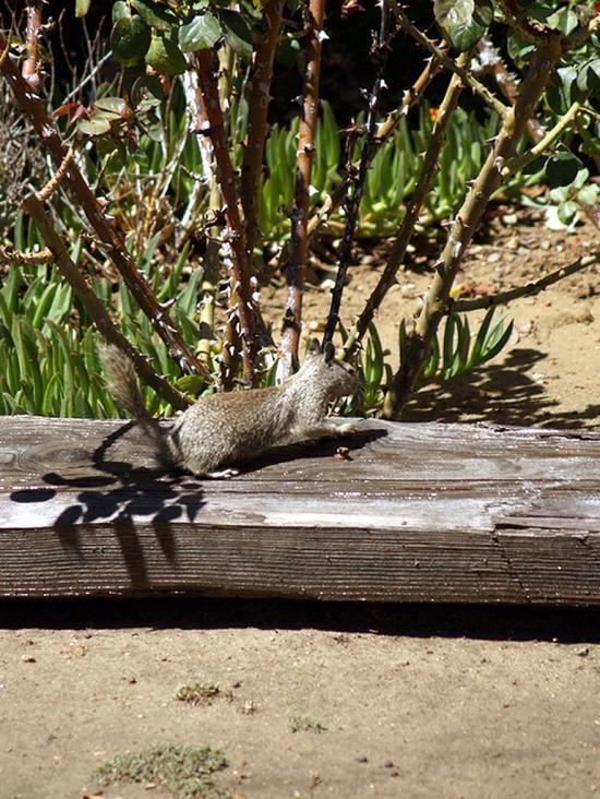 Grown Squirrel 4