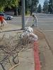 2011.03.18.adopt A Street 041