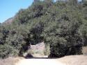 Road Thorugh Trees