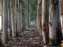 Tree Strip