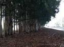 Trees Highway