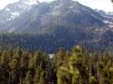 Trees Mt.