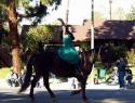 Beauty Rides A Horse