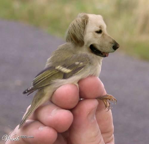 Bird Dog Brown
