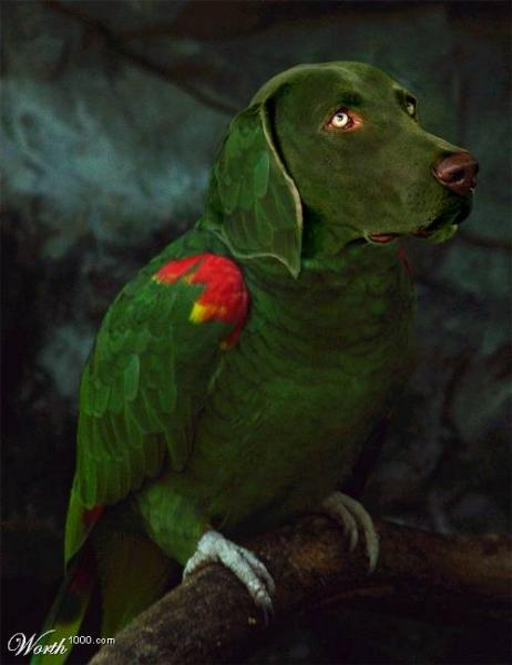 Bird Dog Green