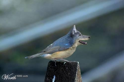 Bird Wolf