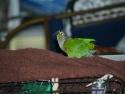 Bird Eat