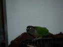 Bird Tail 2