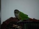 Bird Tail 3
