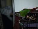 Bird Tail 1