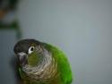 Bird Talking