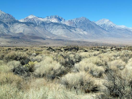 Brush Mountain Blue