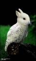 Bunny Bird