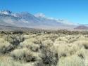 Bush Sierra Mts