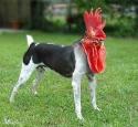 Dogcock