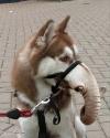 Dogphent