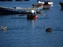 Fishing Boats 19