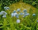 Flowers  015