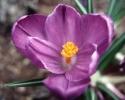 Flowers  020