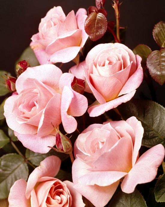 Flowers  005