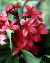 Flowers  008