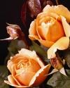 Flowers  040