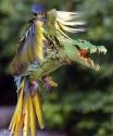 Gator Bird Green