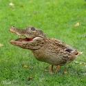 Gator Bird