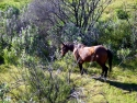 Hiking Rocks And Horses 34