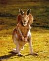 Lionoroo