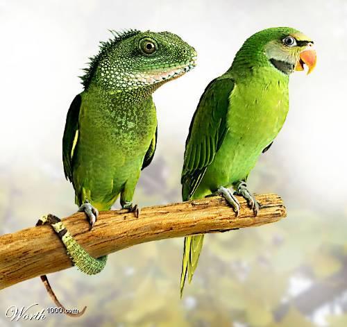 Lizard Bird
