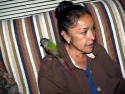 Lupy Bird