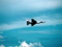 Military Aircraft 292